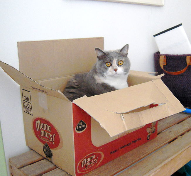 651px-Cat_in_a_big_box